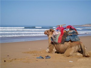 camel-treks-from-essaouira-1395